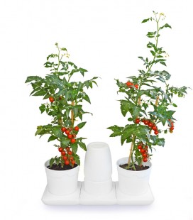 Minigarden Basic M Pots