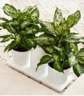 Minigarden Basic M Pots