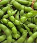 Sojabohnen (Grün), Samen von Minigarden
