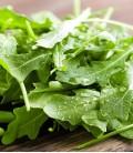 Rucola, Biologisches Saatgut von Minigarden