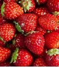 Erdbeeren, Samen von Minigarden
