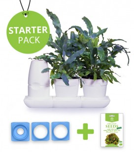 Minigarden Starter Pack Salate und Aromatische