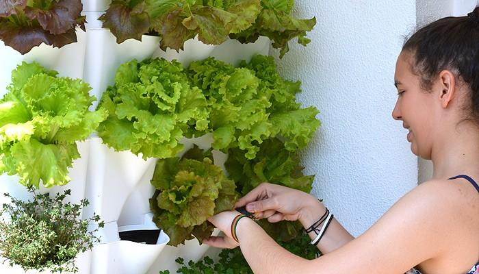 Mein vertikaler Gemüsegarten zu Hause